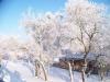 winter-021