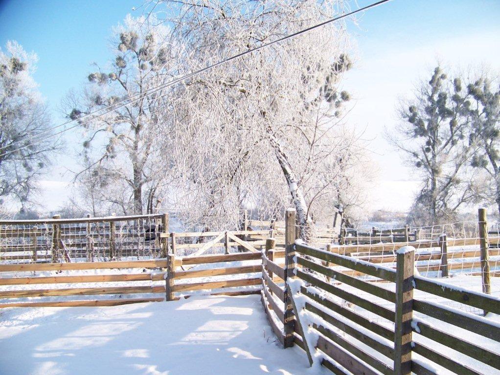 winter-006