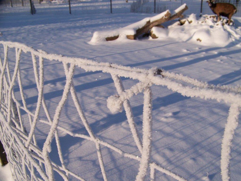 winter-045